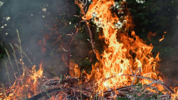 How to Manage Bushfire Risks